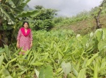 Turmeric: Stimulating commercial cultivation